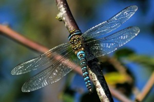Male Migrant Hawker