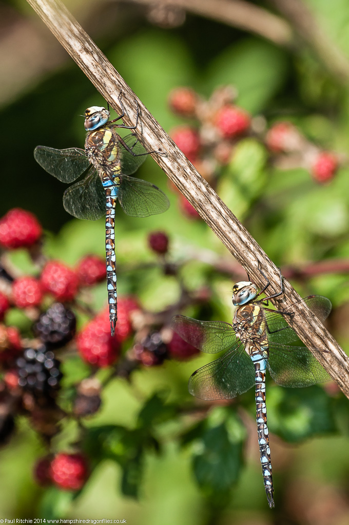 Migrant Hawkers - male
